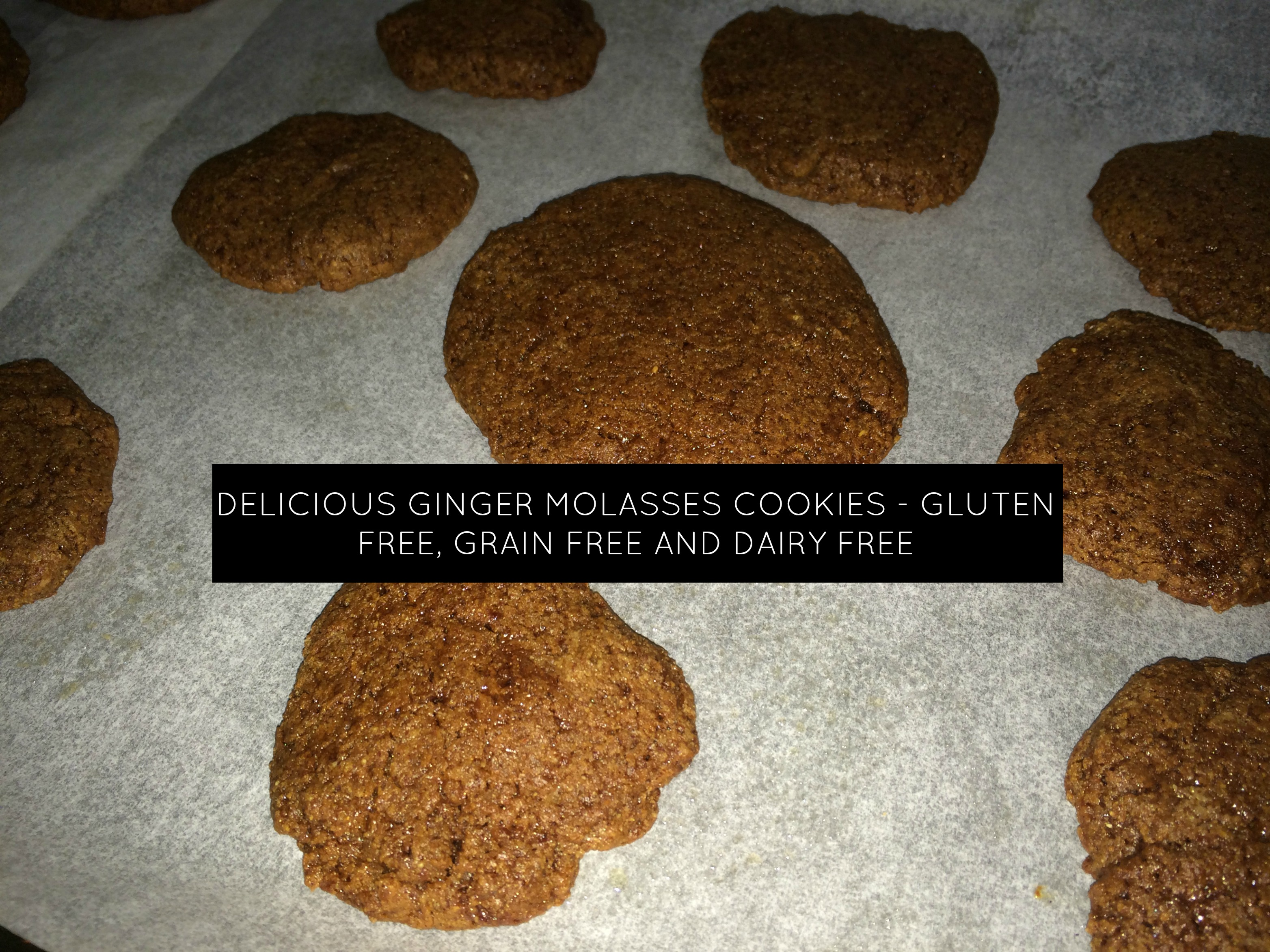 Delicious Ginger Molasses Cookies Gluten Free, Grain Free & Dairy Free
